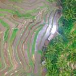 【バリ島観光人気スポット】テガラランライステラスドローン空撮Rice Terrace